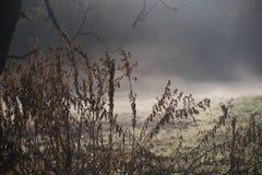 Mgła w jesień wschodzie słońca fotografia stock