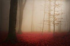Mgła w lesie Obrazy Royalty Free