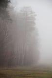 Mgła w lesie po deszczu Zielony las z mgłą Zdjęcia Stock