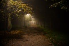 Mgła w parku, noc, miękka ostrość, wysoki iso, zdjęcia stock