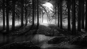 Mgła w starym lesie ilustracji