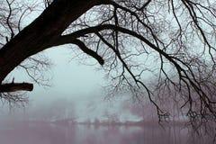 Mgła w zima lesie obrazy stock