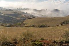 Mgła wchodzić do pszenicznego pole w ranku fotografia stock