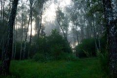 Mgła wcześnie rano obrazy royalty free