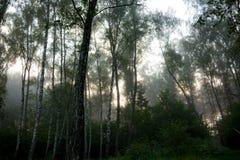 Mgła wcześnie rano obraz royalty free