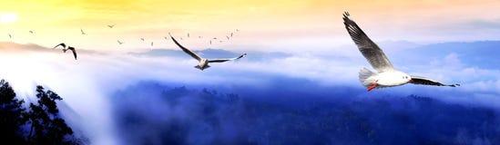 mgła wschód słońca Zdjęcia Royalty Free