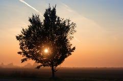 mgła wschód słońca Zdjęcie Royalty Free