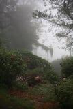mgła zaciemniający drzewo obrazy stock