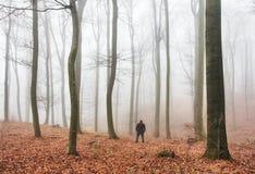 Mgła zakrywa sylwetkę drzewa w jesieni, las Obraz Stock