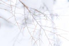 Mgława zatarta gałąź tła fotografia bez liści Niemi tła fotografia, stosowna dla kopii przestrzeni lub teksta zdjęcia royalty free