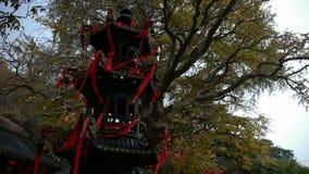 Mgławy Kadzidłowego palnika i ginkgo drzewo w wiatrze, zabytki, antyki, kultura zdjęcie wideo