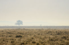 Mgławy ranek w Hortobagy parku narodowym, Węgry Zdjęcia Stock