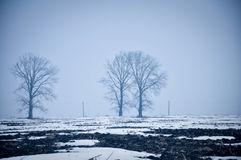 Mgłowa łąka krajobrazu zima Obrazy Stock