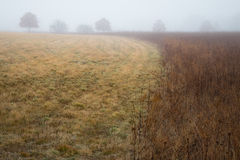Mgłowa łąka w wczesnym poranku Fotografia Stock