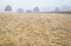 Mgłowa łąka w zimie fotografia royalty free
