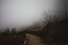 Mgłowa ścieżka na śródziemnomorskim mountarin lesie Zdjęcia Royalty Free