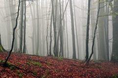 Mgłowa jesień Forrest Obraz Royalty Free