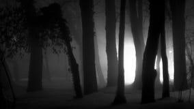 Mgłowa noc w parku obrazy royalty free