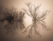 Mgłowa odbijająca wyspa na spokojnej szklistej wodzie Obraz Stock