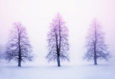 Zim drzewa w mgle przy wschodem słońca Fotografia Royalty Free