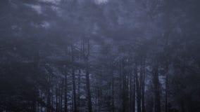 Mgłowi drewna przy półmrokiem obrazy royalty free