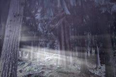 Mgłowi drewna przy półmrokiem zdjęcie royalty free