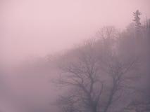 Mgłowi drzewa i zbocze fotografia stock