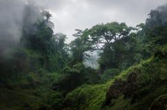 Mgłowi przerastający wzgórza w lesie tropikalnym Cameroon, Afryka zdjęcie stock