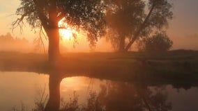 Mgłowy świt nad piękną wiosny rzeką zdjęcie wideo