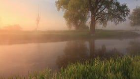 Mgłowy świt nad piękną wiosny rzeką zbiory