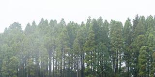 Mgłowy ciemny lasowy tło, monochrom obraz royalty free