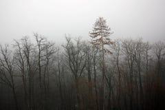 mgłowy depresja las obrazy royalty free