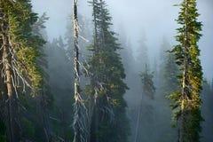 Mgłowy Halny las zdjęcie stock