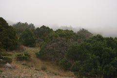 Mgłowy jałowiec Zdjęcia Stock