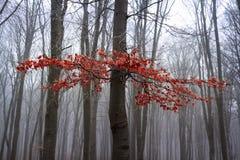 Mgłowy jesień las fotografia royalty free