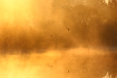 mgłowy krajobraz ilustracja wektor