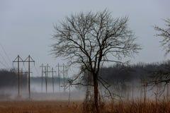 mgłowy krajobraz w Greenwood, grabowi drzewa, dżdżysty jesień skop, ponury nastrój obraz royalty free