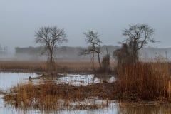 mgłowy krajobraz w Greenwood, grabowi drzewa, dżdżysty jesień skop, ponury nastrój zdjęcie stock