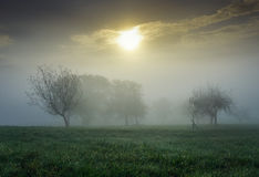Mgłowy krajobraz z drzewami i słońcem Fotografia Royalty Free