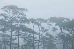 mgłowy las obraz stock