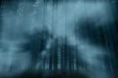 Mgłowy las przy półmrokiem fotografia royalty free
