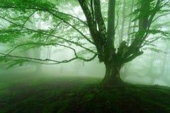 Mgłowy las w wiośnie Zdjęcie Royalty Free
