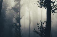 Mgłowy lasowego drzewa szczegół Zdjęcia Stock