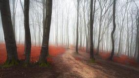 Mgłowy lasowy ślad przez czerwonych liści Fotografia Stock