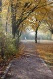 mgłowy lasu światła ścieżki jaśnienie Obraz Stock