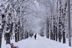 Mgłowy mroźny ranek w Petersburg Rosja Ludzie chodzą pracować na śnieżystej alei zdjęcie stock
