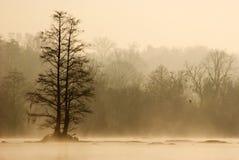 Mgłowy ranek na sawanny rzece obrazy stock