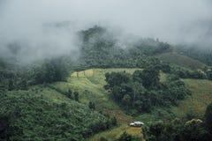 Mgłowy ranek przy Herbacianej plantacji i góry krajobrazem w Tajlandia, zdjęcie stock