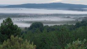 Mgłowy ranek, tanczy przy świtem zbiory