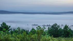 Mgłowy ranek, upływ zbiory